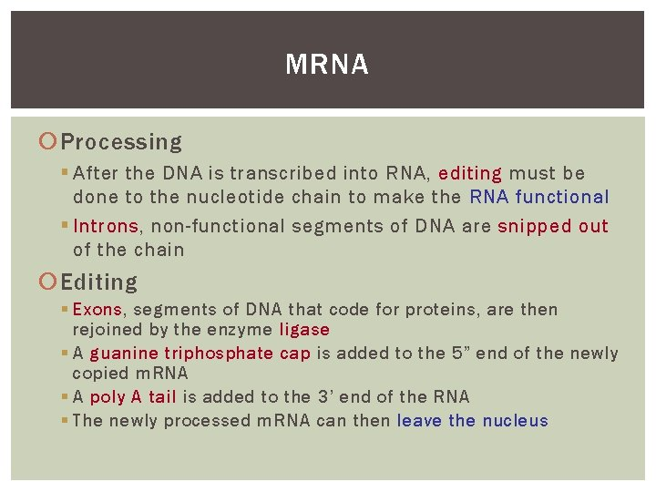 MRNA Processing § After the DNA is transcribed into RNA, editing must be done
