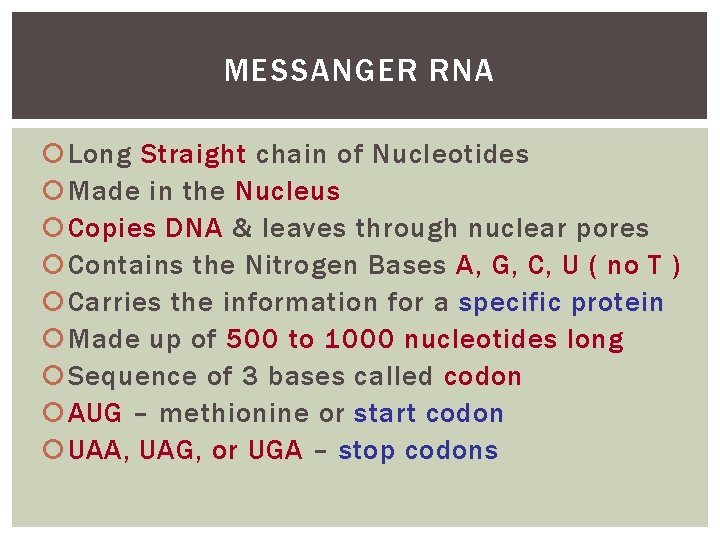 MESSANGER RNA Long Straight chain of Nucleotides Made in the Nucleus Copies DNA &