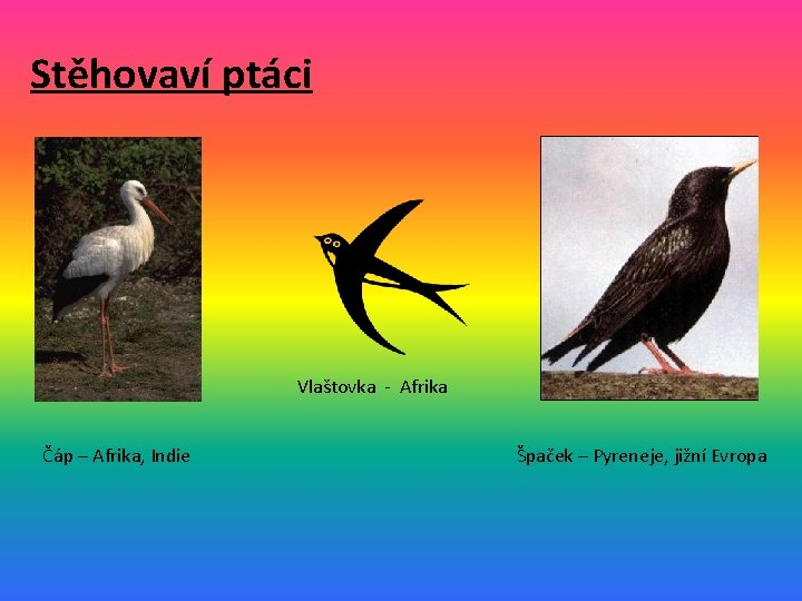 Stěhovaví ptáci Vlaštovka - Afrika Čáp – Afrika, Indie Špaček – Pyreneje, jižní Evropa