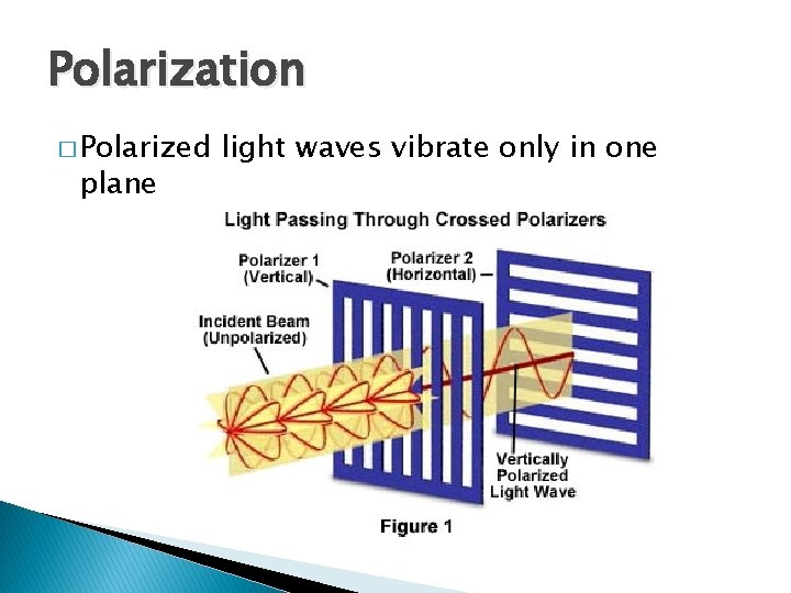 Polarization � Polarized plane light waves vibrate only in one