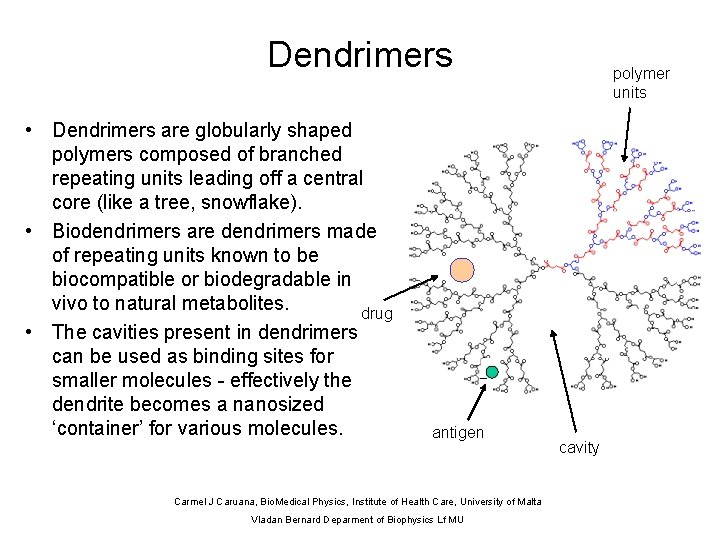 Dendrimers • Dendrimers are globularly shaped polymers composed of branched repeating units leading off