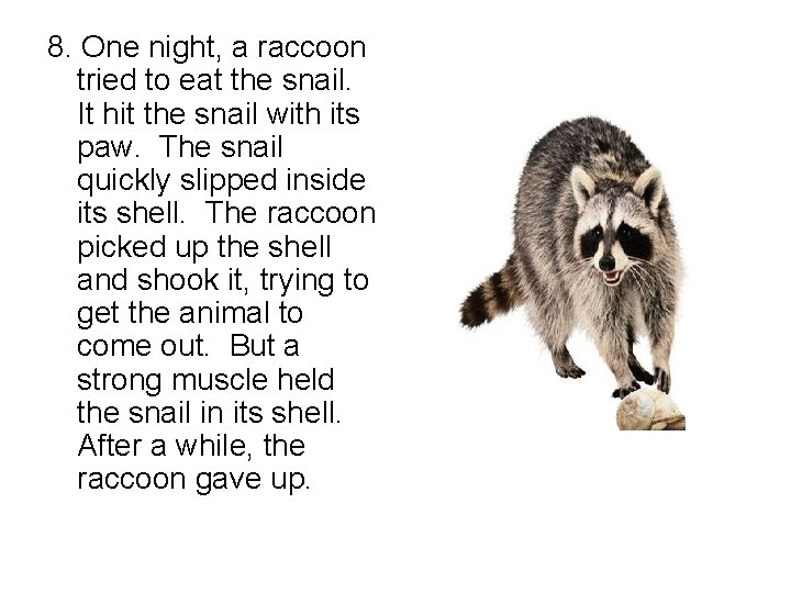 8. One night, a raccoon tried to eat the snail. It hit the snail
