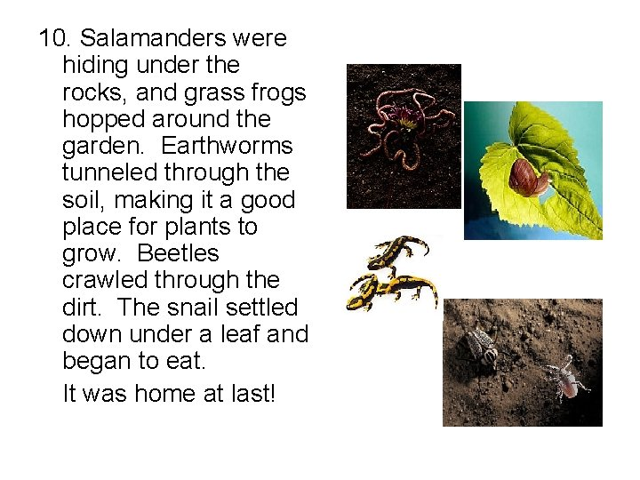 10. Salamanders were hiding under the rocks, and grass frogs hopped around the garden.