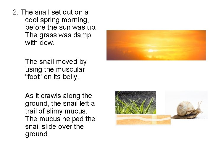 2. The snail set out on a cool spring morning, before the sun was