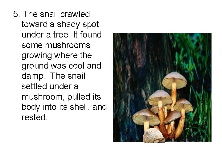 5. The snail crawled toward a shady spot under a tree. It found some