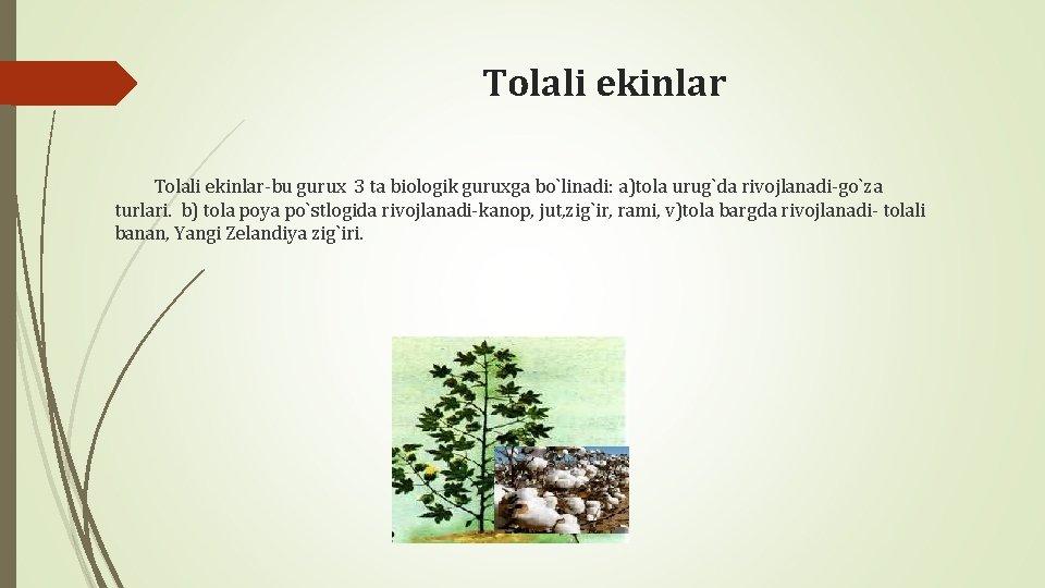 Tolali ekinlar-bu gurux 3 ta biologik guruxga bo`linadi: a)tola urug`da rivojlanadi-go`za turlari. b) tola