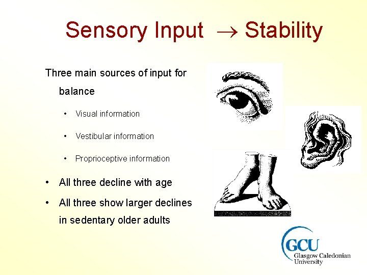 Sensory Input Stability Three main sources of input for balance • Visual information •