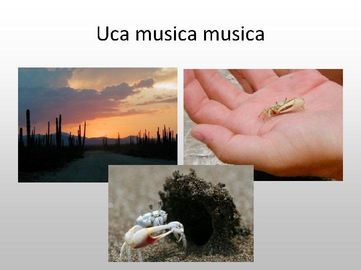 Uca musica