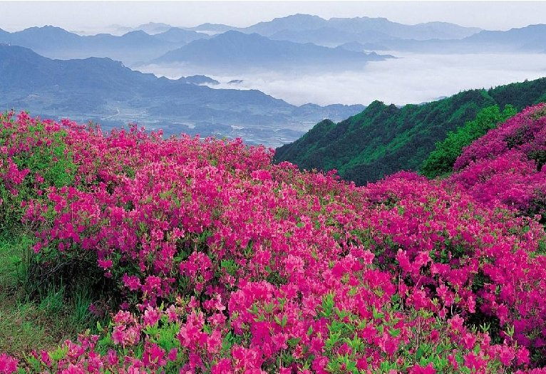 Tuo tarpu trečiasis sūnus nusivedė tėvą į sodą, kur žydėjo milijonai puikiausių gėlių. Tada