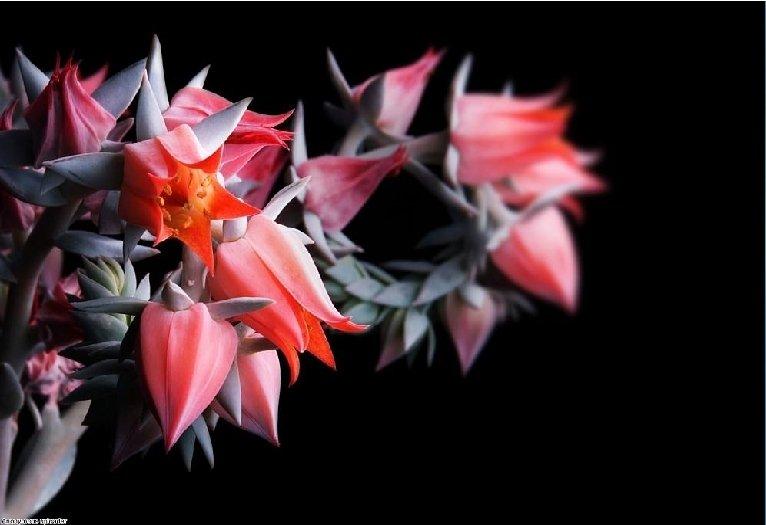 Tai ne sutapimas, kad gėlės yra meilės simbolis, įvairaus amžiaus, visose šalyse, visose visuomenėse.