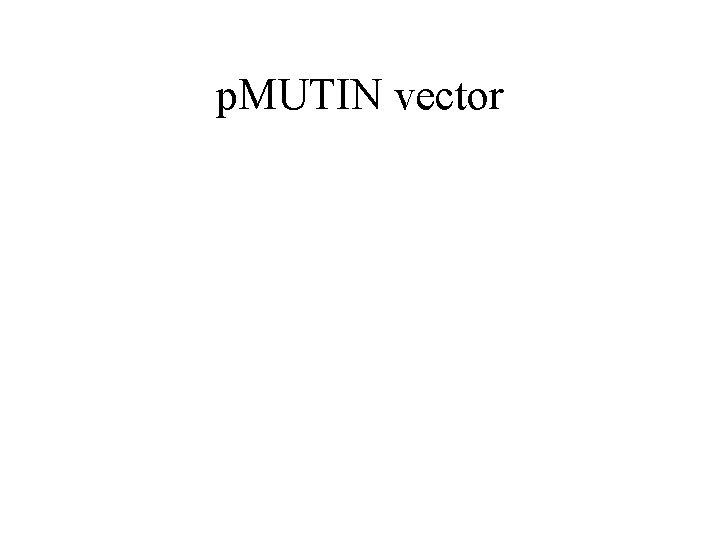 p. MUTIN vector
