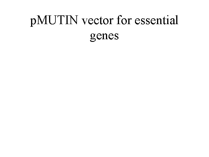 p. MUTIN vector for essential genes