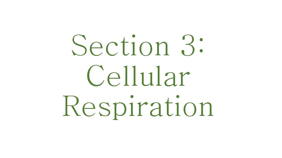Section 3: Cellular Respiration