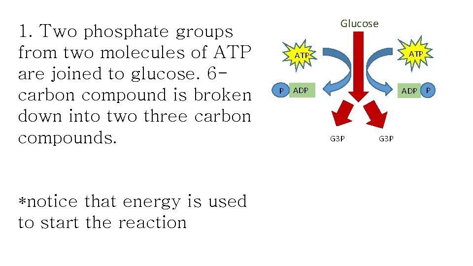 1. Two phosphate groups from two molecules of ATP are joined to glucose. 6
