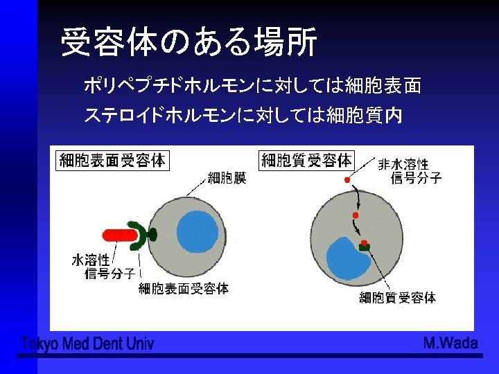 受容 体 細胞膜