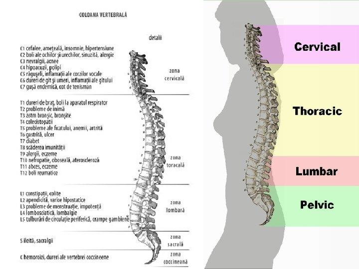 De ce este indicat sa mergem la osteopat in cazul unei entorse?   Clinica Eliade
