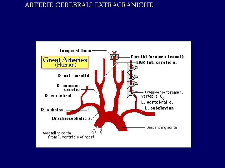 ARTERIE CEREBRALI EXTRACRANICHE