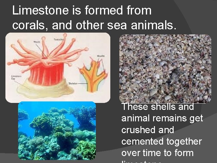 Limestone is formed from corals, and other sea animals. These shells and animal remains