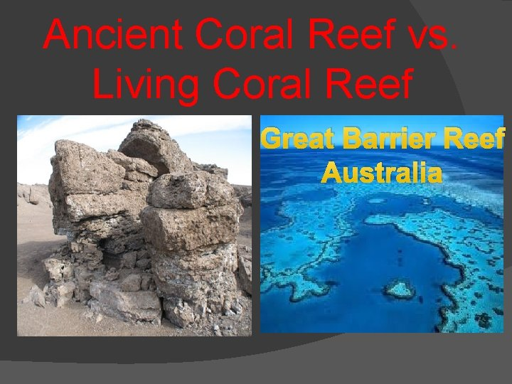 Ancient Coral Reef vs. Living Coral Reef Great Barrier Reef Australia