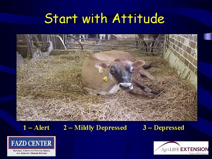 Start with Attitude 1 – Alert 2 – Mildly Depressed 3 – Depressed