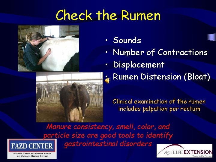 Check the Rumen • • Sounds Number of Contractions Displacement Rumen Distension (Bloat) Clinical
