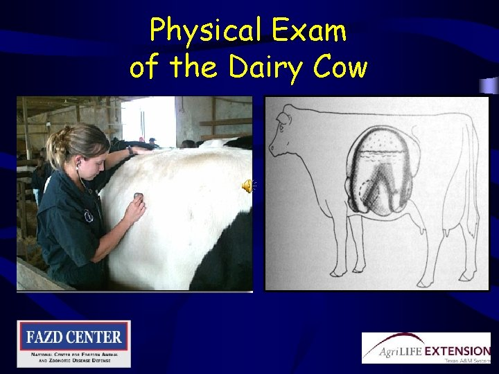 Physical Exam of the Dairy Cow