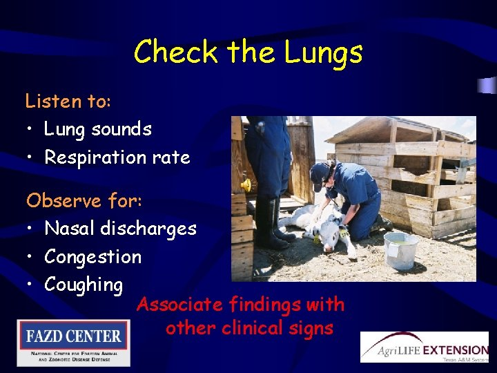 Check the Lungs Listen to: • Lung sounds • Respiration rate Observe for: •