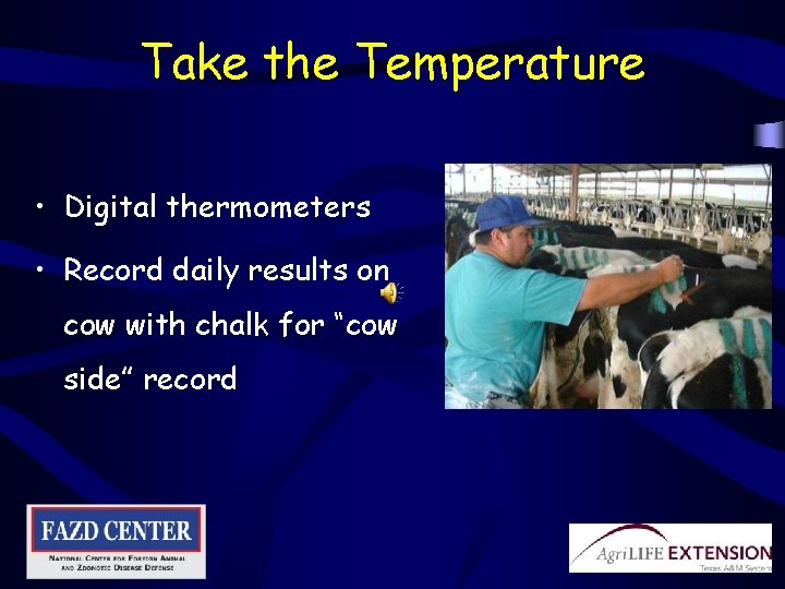 Take the Temperature • Digital thermometers • Record daily results on cow with chalk