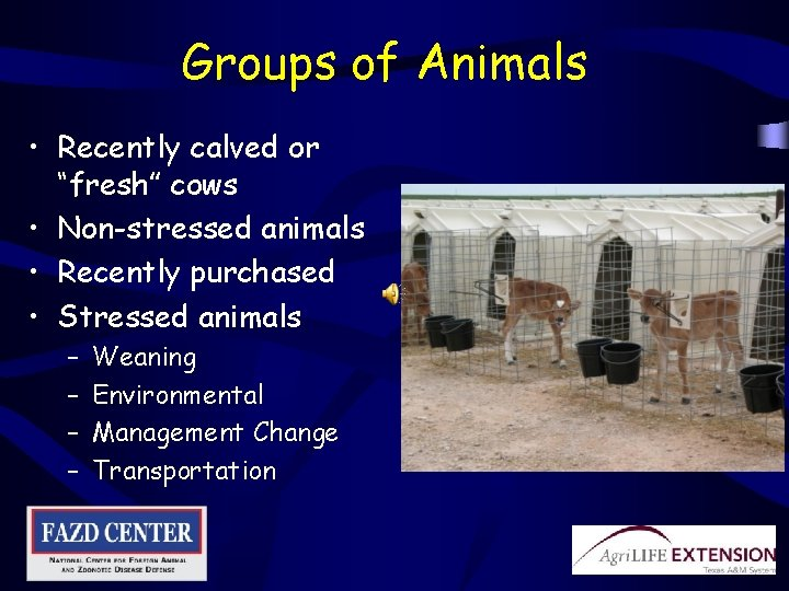 """Groups of Animals • Recently calved or """"fresh"""" cows • Non-stressed animals • Recently"""
