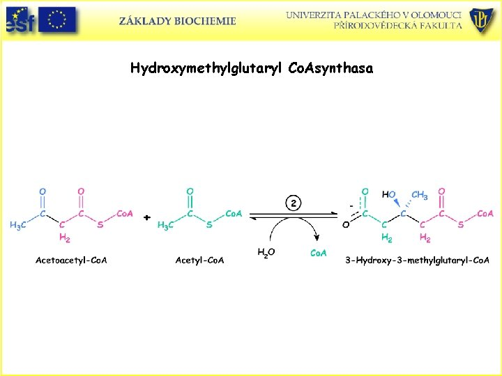 Hydroxymethylglutaryl Co. Asynthasa