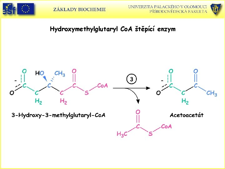 Hydroxymethylglutaryl Co. A štěpící enzym