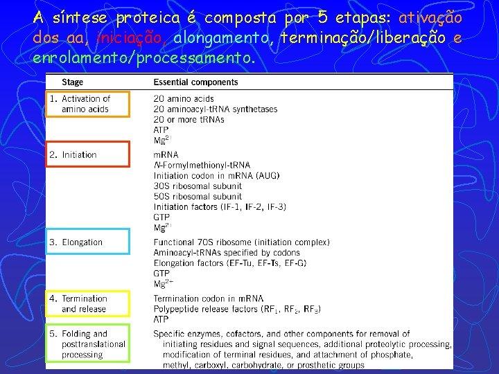 A síntese proteica é composta por 5 etapas: ativação dos aa, iniciação, alongamento, terminação/liberação