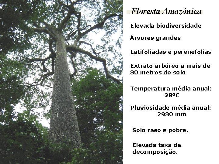 Floresta Amazônica Elevada biodiversidade Árvores grandes Latifoliadas e perenefolias Extrato arbóreo a mais de