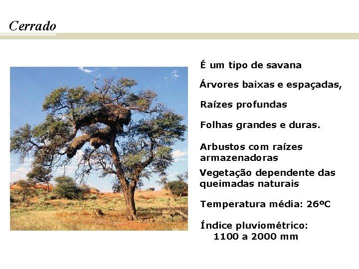 Cerrado É um tipo de savana Árvores baixas e espaçadas, Raízes profundas Folhas grandes