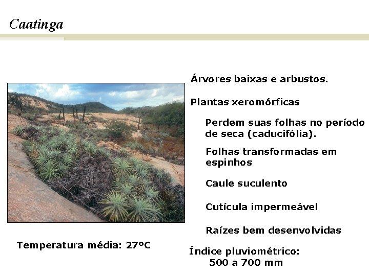 Caatinga. BIOMAS E FITOGEOGRAFIA DO BRASIL Árvores baixas e arbustos. Plantas xeromórficas Perdem suas