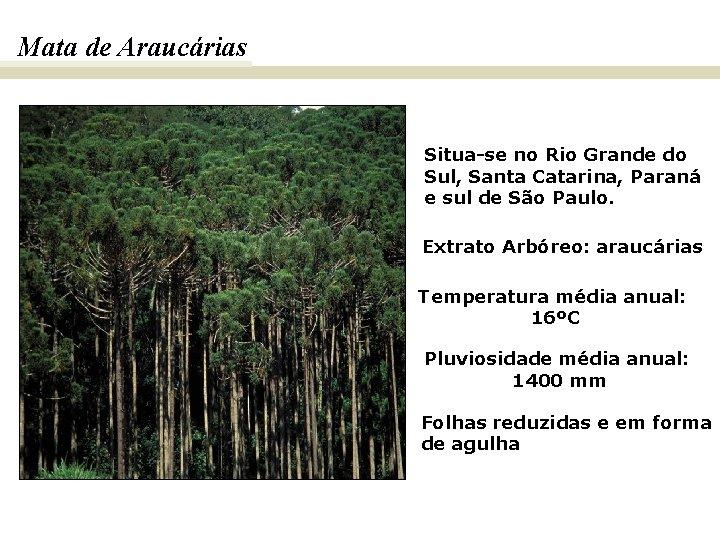 Mata de Araucárias Situa-se no Rio Grande do Sul, Santa Catarina, Paraná e sul