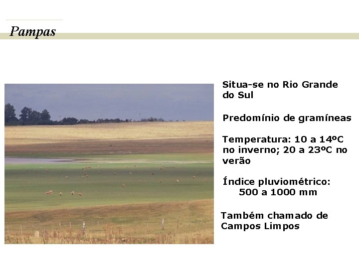 Pampas BIOMAS E FITOGEOGRAFIA DO BRASIL Situa-se no Rio Grande do Sul Predomínio de