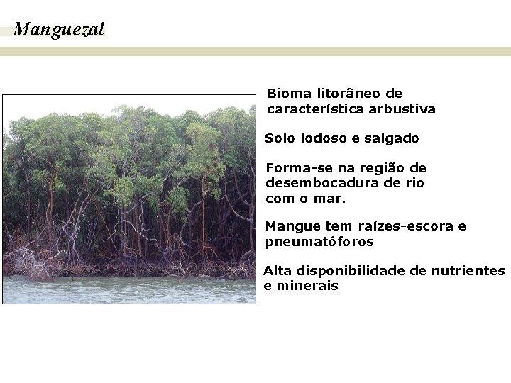 Manguezal BIOMAS E FITOGEOGRAFIA DO BRASIL Bioma litorâneo de característica arbustiva Solo lodoso e