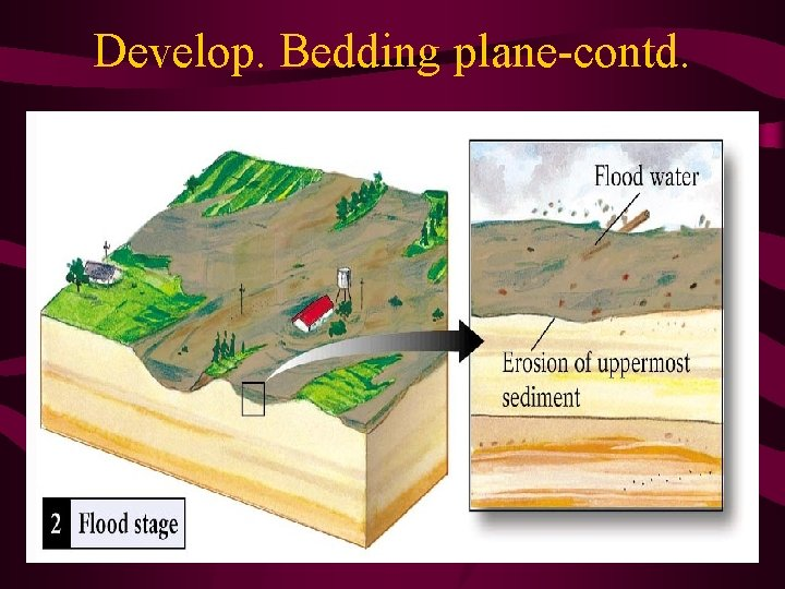 Develop. Bedding plane-contd.