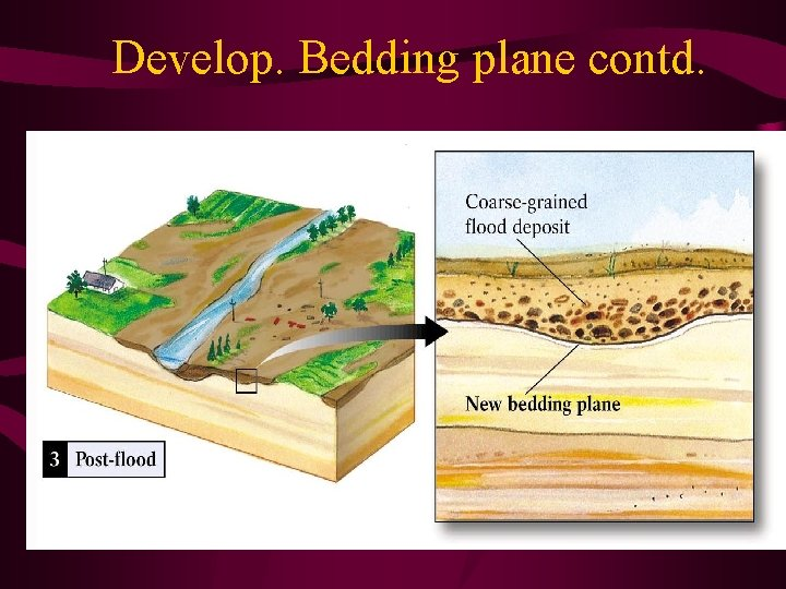 Develop. Bedding plane contd.