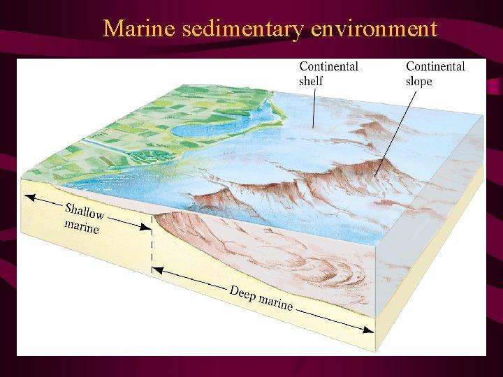 Marine sedimentary environment