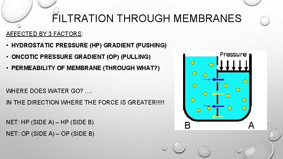 FILTRATION THROUGH MEMBRANES AFFECTED BY 3 FACTORS: • HYDROSTATIC PRESSURE (HP) GRADIENT (PUSHING) •