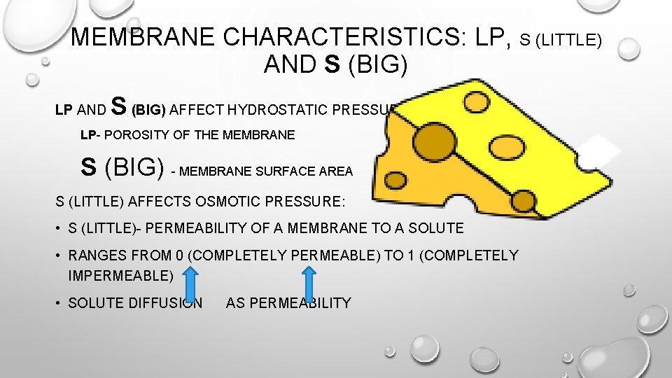 MEMBRANE CHARACTERISTICS: LP, S (LITTLE) AND S (BIG) LP AND S (BIG) AFFECT HYDROSTATIC
