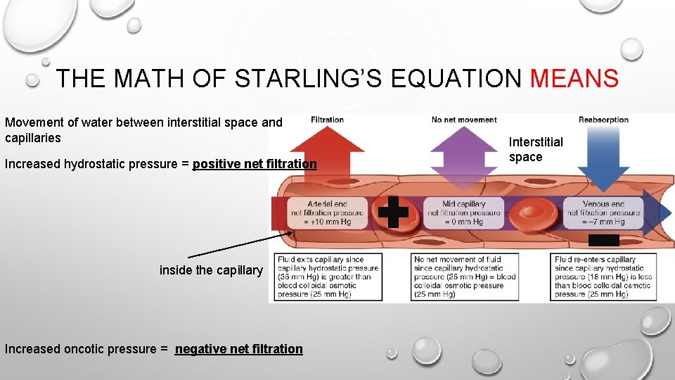 THE MATH OF STARLING'S EQUATION MEANS Movement of water between interstitial space and capillaries
