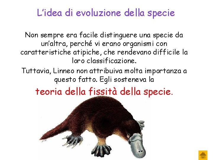 L'idea di evoluzione della specie Non sempre era facile distinguere una specie da un'altra,