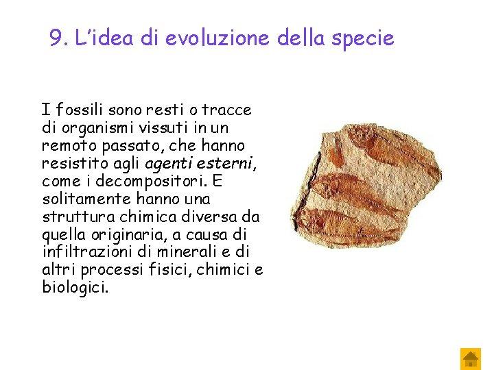9. L'idea di evoluzione della specie I fossili sono resti o tracce di organismi