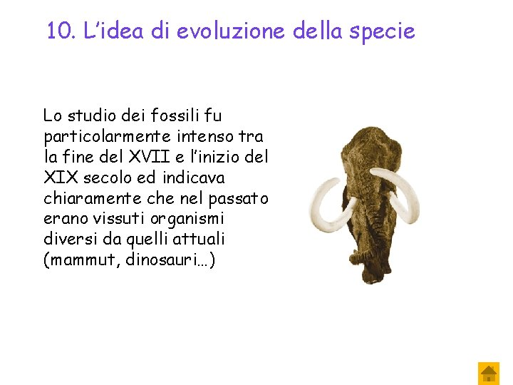 10. L'idea di evoluzione della specie Lo studio dei fossili fu particolarmente intenso tra