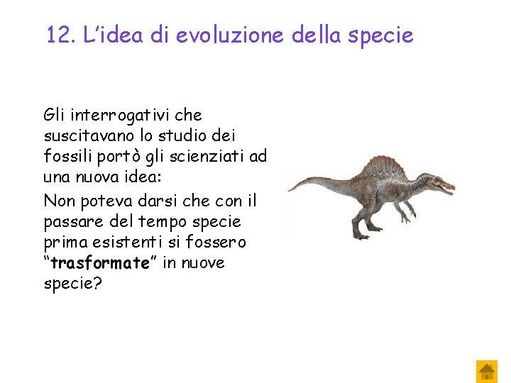 12. L'idea di evoluzione della specie Gli interrogativi che suscitavano lo studio dei fossili