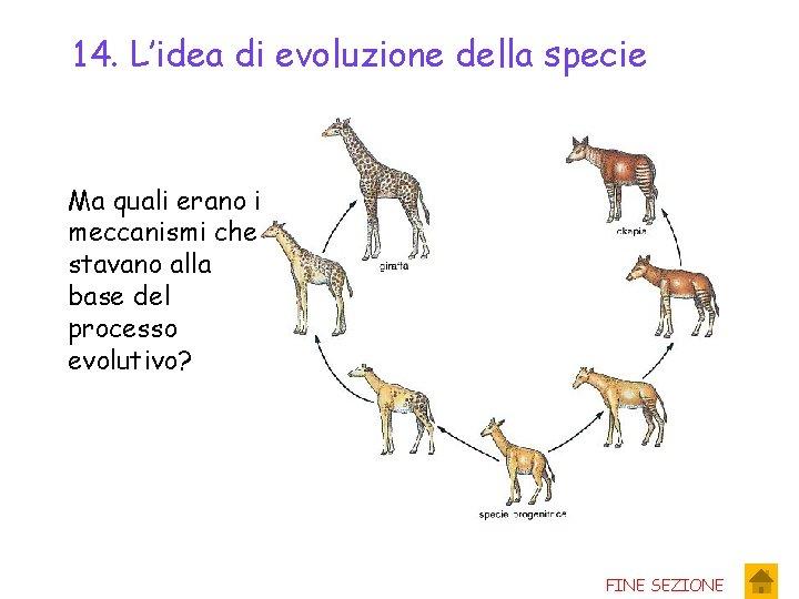 14. L'idea di evoluzione della specie Ma quali erano i meccanismi che stavano alla