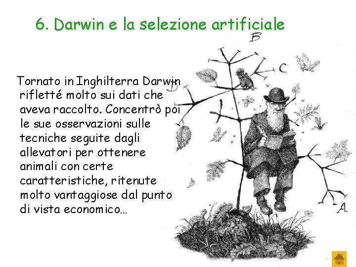 6. Darwin e la selezione artificiale Tornato in Inghilterra Darwin rifletté molto sui dati